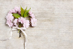 Beautiful flowering almond (prunus triloba) on wooden background Royalty Free Stock Image