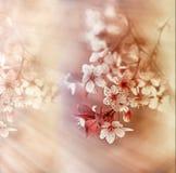 Beautiful flowering - blooming Stock Photo
