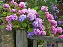 Beautiful flowering bush Stock Photo