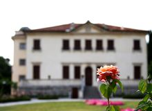 Beautiful flowering Roses in the garden of a historical venetian Stock Photography