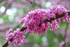 Beautiful Flowering Tree Stock Photos