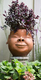 Beautiful flowerpot. Royalty Free Stock Images