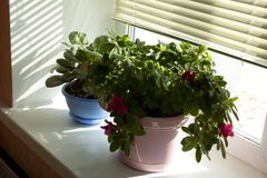 Beautiful flowerpot on a window sill Royalty Free Stock Images