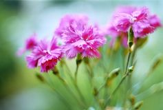 Beautiful flowers. Beautiful wild flowers on a green lawn Stock Images