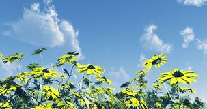 Beautiful flowers. Against a blue sky Royalty Free Stock Photography