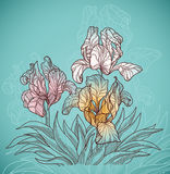 Beautiful flowers. Vector soft green background with three flowers line art Stock Photography