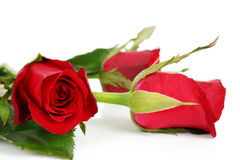 Beautiful flowers 2. Close-up red roses stock photography