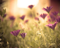 Beautiful flowers Royalty Free Stock Photos