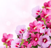 Beautiful flowers Stock Photos