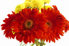 Beautiful flowers. Bouquet of red and yellow flowers royalty free stock images