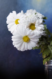 Beautiful Flowers. And blue background Royalty Free Stock Photo