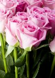 Beautiful flowers. Rose (Rosa), a kind of flower which belongs to the rose-like family, includes over 200 species (according to some researchers up to a few Stock Photos
