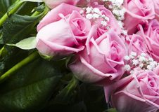 Beautiful flowers. Rose (Rosa), a kind of flower which belongs to the rose-like family, includes over 200 species (according to some researchers up to a few Royalty Free Stock Images
