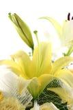 Beautiful flowers. On white background Royalty Free Stock Image