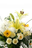 Beautiful flowers. On white background Stock Photo