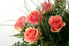 Beautiful flowers. On white background Royalty Free Stock Images