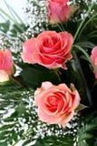 Beautiful flowers. On white background Royalty Free Stock Photo