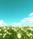Beautiful flowers. Beautiful field of flowers. 3d image Stock Photos