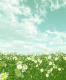 Beautiful flowers. Beautiful field of flowers. 3d image Stock Photo