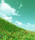 Beautiful flowers. Beautiful field of flowers and white clouds. 3d image Royalty Free Stock Photos