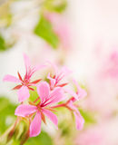 Beautiful flowers Stock Photography