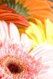Beautiful flowers Royalty Free Stock Photo