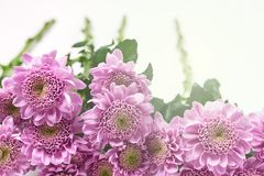 Beautiful Flowers Abstract Background Spring Summer Background with Flowers Spring Flowers Toned Horizontal Easter Holidays. Background stock photos