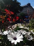 Beautiful flowers against the background of the European city. Stockholm, Sweden. Summer stock photography