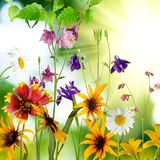 beautiful flowers against the sun Stock Image
