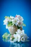 Beautiful flowers of apple trees Stock Image