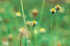 A group of beautiful flowers between the grass stock images