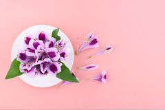 Beautiful flowers of astromeria with a white cup on a pink background royalty free stock photos