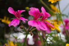 Beautiful flowers Stock Photos