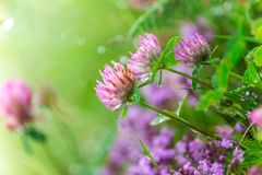 Beautiful flowers background Royalty Free Stock Photos