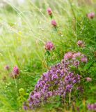 Beautiful flowers background Royalty Free Stock Photo
