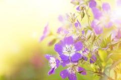 Beautiful flowers background. Stock Photo
