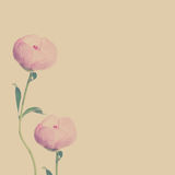 Beautiful Flowers Background with Copy space Stock Photo