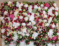 Beautiful flowers background Stock Image