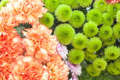 Beautiful flowers background Stock Images