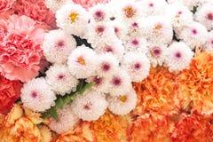 Beautiful flowers background Stock Image