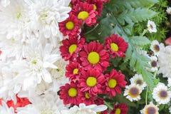 Beautiful flowers background Stock Photos