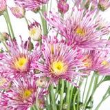Beautiful flowers background isolated on white Stock Photo