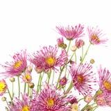 Beautiful flowers background isolated on white Stock Photography