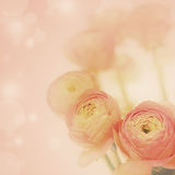 Beautiful flowers background. Beautiful flowers made with color filters Stock Photography