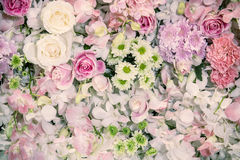 Beautiful flowers background. - Mood and tone Royalty Free Stock Photos