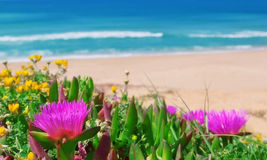 Beautiful flowers on a background of the sea. Stock Images