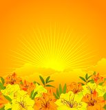 Beautiful flowers on a background sky Royalty Free Stock Image