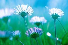 A beautiful flowers background stock photo