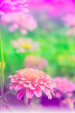 Beautiful flowers background. Beautiful flowers vertical background made with color filters stock photo