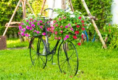 Beautiful flowers on the basket of bicycle in the green garden royalty free stock image
